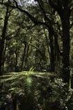 Het Nationale Park van regenwoudfiordland Mooi Nieuw Zeeland Stock Afbeeldingen