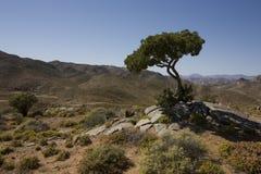 Het Nationale Park van Richtersveld, Zuid-Afrika. Royalty-vrije Stock Foto