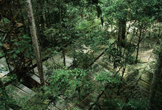 Het Nationale Park van Tapajos Royalty-vrije Stock Fotografie