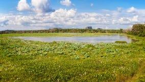 Het Nationale Park van Yala, Sri Lanka Stock Afbeeldingen