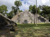 Het Nationale Park van Yaxhanakum Naranjo, Mayan Archeologisch Monument, Guatemala royalty-vrije stock afbeeldingen