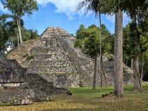 Het Nationale Park van Yaxhanakum Naranjo, Mayan Archeologisch Monument, Guatemala stock afbeeldingen