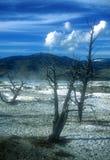 Het Nationale Park van Yellowstone Stock Afbeelding