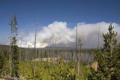 Het nationale park van Yellowstone Stock Fotografie