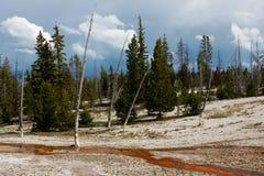 Het Nationale Park van Yellowstone Royalty-vrije Stock Fotografie