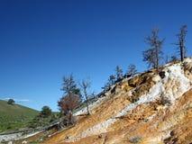 Het Nationale Park van Yellowstone royalty-vrije stock afbeeldingen