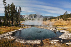 Het Nationale Park van Yellowstone stock foto's