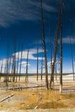 Het Nationale Park van Yellowstone Royalty-vrije Stock Foto's