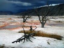 Het Nationale Park van Yellowstone Royalty-vrije Stock Foto