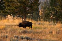 Het Nationale Park van Yellowstone, de V stock foto