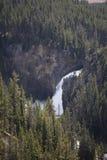 Het Nationale Park van Yellowstone - Hogere Dalingen Royalty-vrije Stock Afbeelding