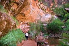Het Nationale Park van Zion Royalty-vrije Stock Foto's