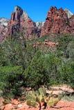 Het Nationale Park van Zion, de V.S. Stock Foto's