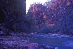 Het Nationale Park van Zion, Utah Royalty-vrije Stock Afbeeldingen