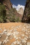 Het Nationale Park van Zion, Utah, de V stock foto's