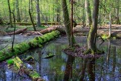 Het natte gemengde bos van de lente met bevindend water Stock Afbeelding