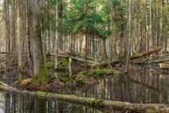 Het natte gemengde bos van de lente met bevindend water royalty-vrije stock afbeelding