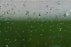 Het natte vensterscherm stock foto's
