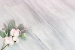 Het natuurlijke katoenen stam en oor van het lam op marmeren achtergrond stock fotografie