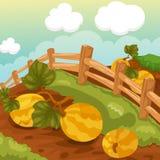 Het natuurlijke landbouwbedrijf van het landschap Stock Afbeelding