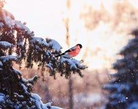 Het natuurlijke landschap van de Kerstmisprentbriefkaar met een sitti van de vogelgoudvink stock foto