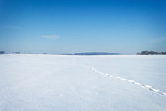 Het natuurlijke landschap van de winter dat met sneeuw wordt behandeld Stock Afbeeldingen