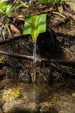 Het natuurlijke Mineraalwater stromen Royalty-vrije Stock Afbeeldingen