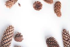 Het natuurlijke patroon van de kegelsamenstelling op wit Royalty-vrije Stock Foto's