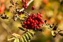 Het natuurlijke Vogelvoedsel Hangen van een Tak van een Altijdgroene Boom royalty-vrije stock foto
