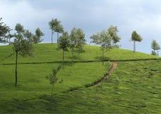 Het natuurlijke wild Kerala Stock Afbeelding