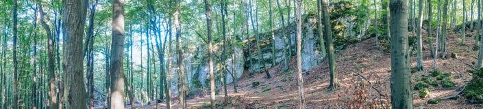 Het Natuurreservaat Ostreznik Royalty-vrije Stock Afbeeldingen