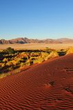Het Natuurreservaat van de Rand van Namib (Namibië) Stock Afbeeldingen