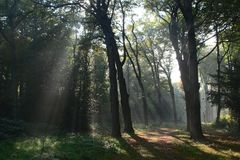 Mysticus Nederlands bos Royalty-vrije Stock Fotografie