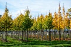 Het Nederlandse gevormde kinderdagverblijf van exclusief espaliered decoratieve bomen, p royalty-vrije stock fotografie