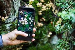 Het nemen van een beeld van paddestoelen met een smartphone stock afbeelding
