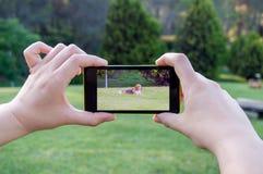 Het nemen van een beeld van uw hond Stock Foto's