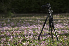 Het nemen van foto in het Chatuchak-park Stock Fotografie