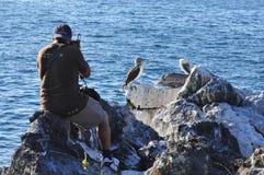 Het nemen van foto's van de vogels stock foto's