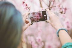 Het nemen van foto van bloesemboom royalty-vrije stock afbeeldingen