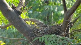 Het nest Royalty-vrije Stock Afbeeldingen