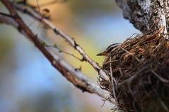 Het nest stock foto