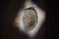 Het nest is esp, polist het espnest aan het eind van bree royalty-vrije stock afbeelding
