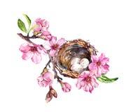 Het nest met eieren op de tak van de kersenbloesem, sakura bloeit in de lentetijd Waterverftakje vector illustratie
