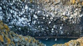 Het nest overzeese van de vogelmeeuw oceaan stock video