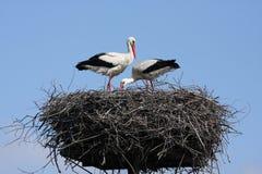 Het nest van Crowâ ² s Stock Fotografie