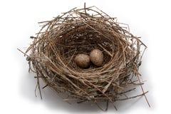 Het nest van de koolmees Stock Foto