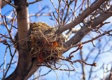 Het Nest van de lege Vogel stock foto