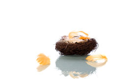 Het Nest van de lege Vogel royalty-vrije stock afbeelding