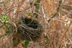 het nest van de lege vogel in een struik stock fotografie