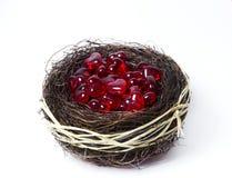 Het nest van de liefde Royalty-vrije Stock Foto's